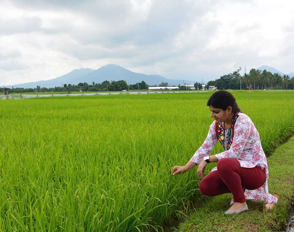 Dr. Sandhu aims to transform rice production systems to help poor farmers struggling to cope in a changing world. (Photo by Robert Coe, IRRI)
