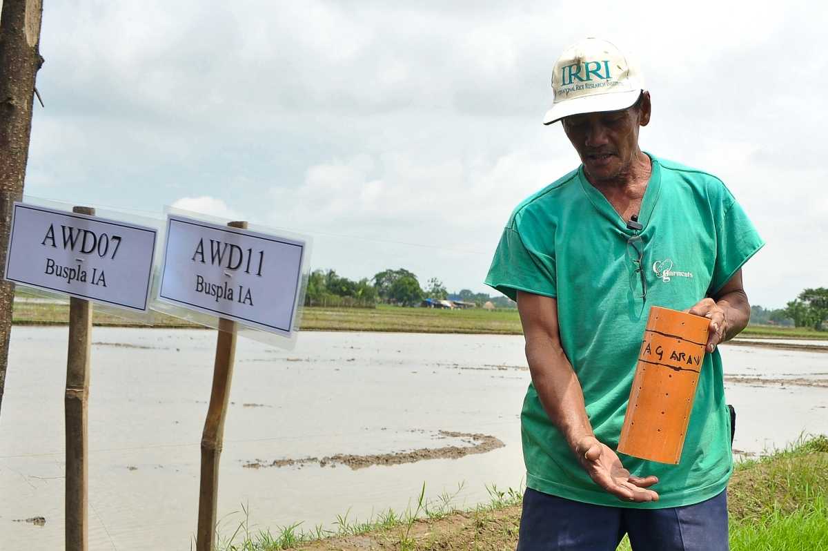 The IRRI-developed alternate wetting and drying technology not only saves irrigation water but also helps reduce methane gas emission from rice production. (Photo: IRRI)