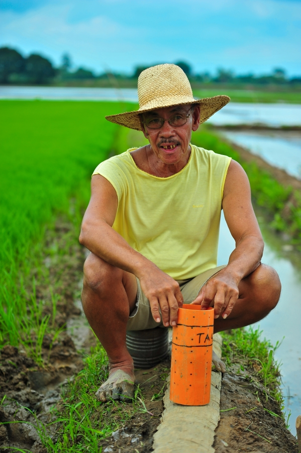 A Filipino farmer is set to use an AWD pipe in his rice field. AWD enables farmers to save on irrigation water by up to 30% and reduces methane emissions by 30‒70% without yield loss. (Photo by Isagani Serrano, IRRI)