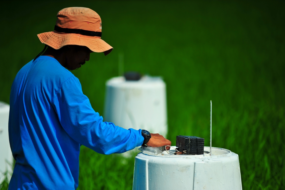 Collecting information about the mitigation potential of AWD in the Philippines. (Photo by Isagani Serrano, IRRI)