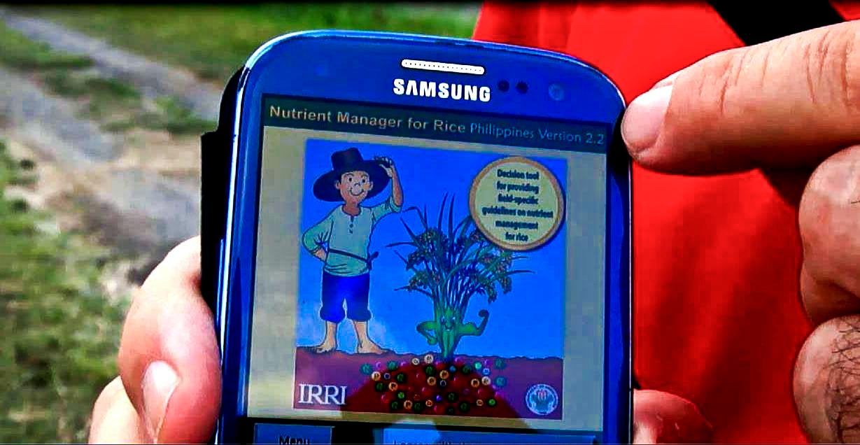 Nutrient Manager for Rice provides farmers in the Philippines with advice on best fertilizer through mobile phones. (Photo: IRRI)