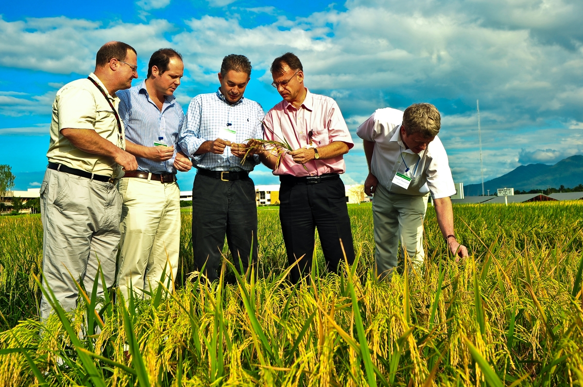 (From left to right) Kellogg's Rice Sustainability Manager Richard Burkinshaw, UN EnvironmentSustainable Food Systems and Agriculture Programme Officer James Lomax, Head of Sustainability at Louis Dreyfus CommoditiesGuy Hogge, RICE Director Bas Bouman, and former IRRIDevelopment DirectorDuncan Macintosh inspect rice plants in the field at IRRI headquarters during the inaugural meeting of the Sustainable Rice Platform in 2011. (Photo: IRRI)