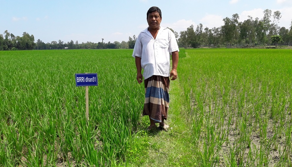 Mr. Sarkar calls BRRI dhan51 a miracle variety due to the variety's ability to survive floods. (Photo by Md. Ahadat Hossain)