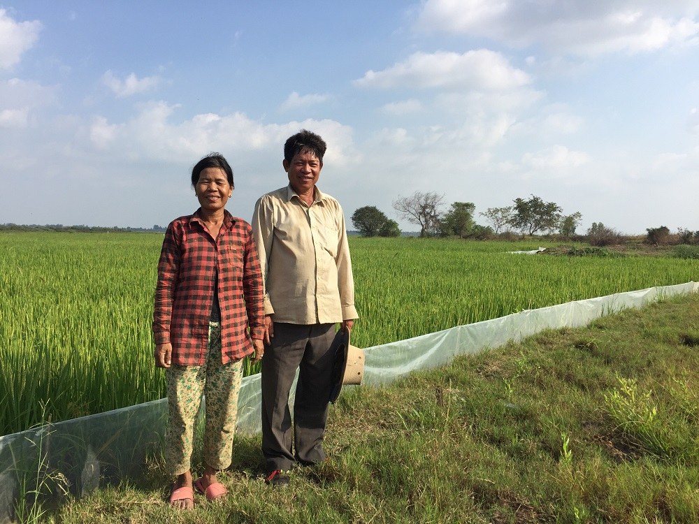 Mr. Lay Nget and his wife installed a trap barrier system to manage rodents in their rice farm. (Photo: EPIC)