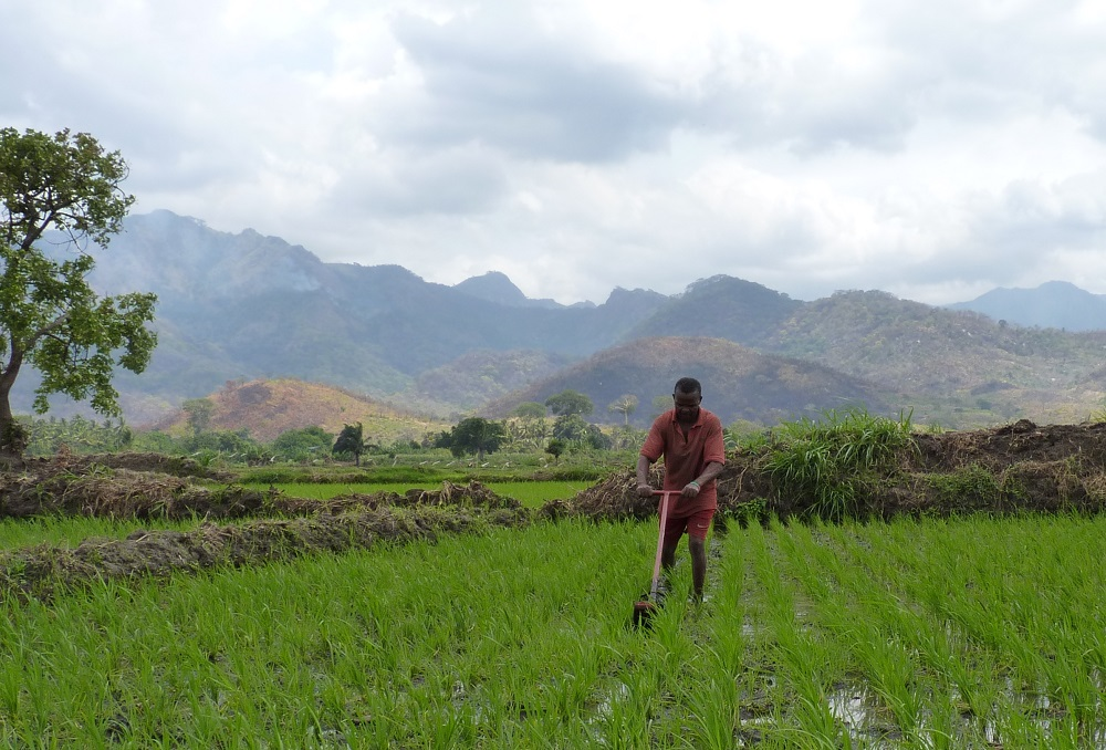 Weeding by rotary weeder in Tanzania. (Photo by J. Rodenburg, Natural Resources Institute)