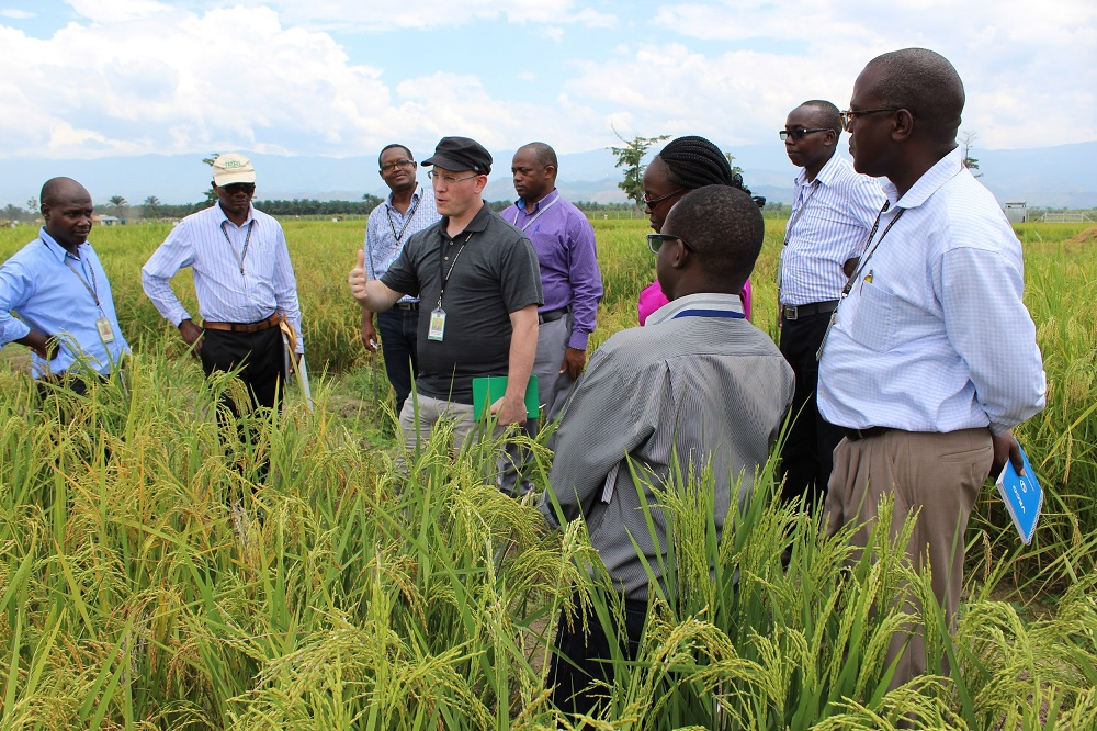 IRRI has worked in Burundi since 2008 to enhance national capacity in breeding and research on rice and rice-based systems in the country. These will amplify inter-regional knowledge sharing and capacity building to pave the way for global solutions to local challenges. (Photo: IRRI)
