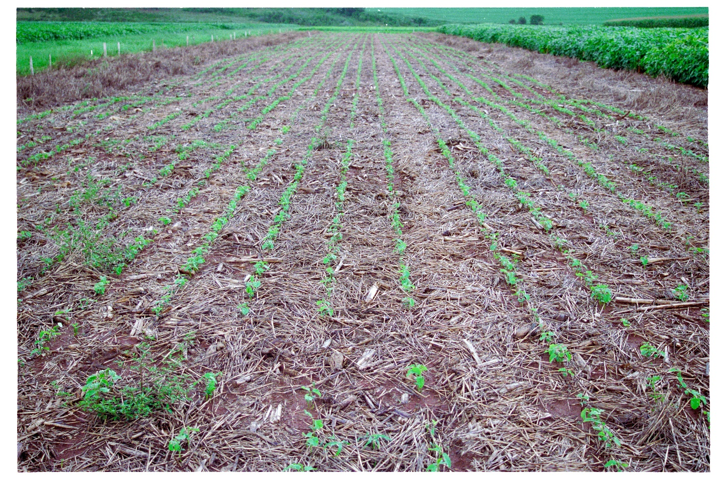 Conservation agriculture in Brazil. The practice protects soil from erosion and improves soil health. (Photo by Y. Niino, FAO).