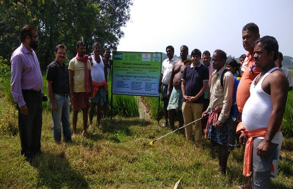 IRRI-OUAT collaborative project on climate smart agricultural practices in Puri district, Odisha. (Photo: IRRI India)