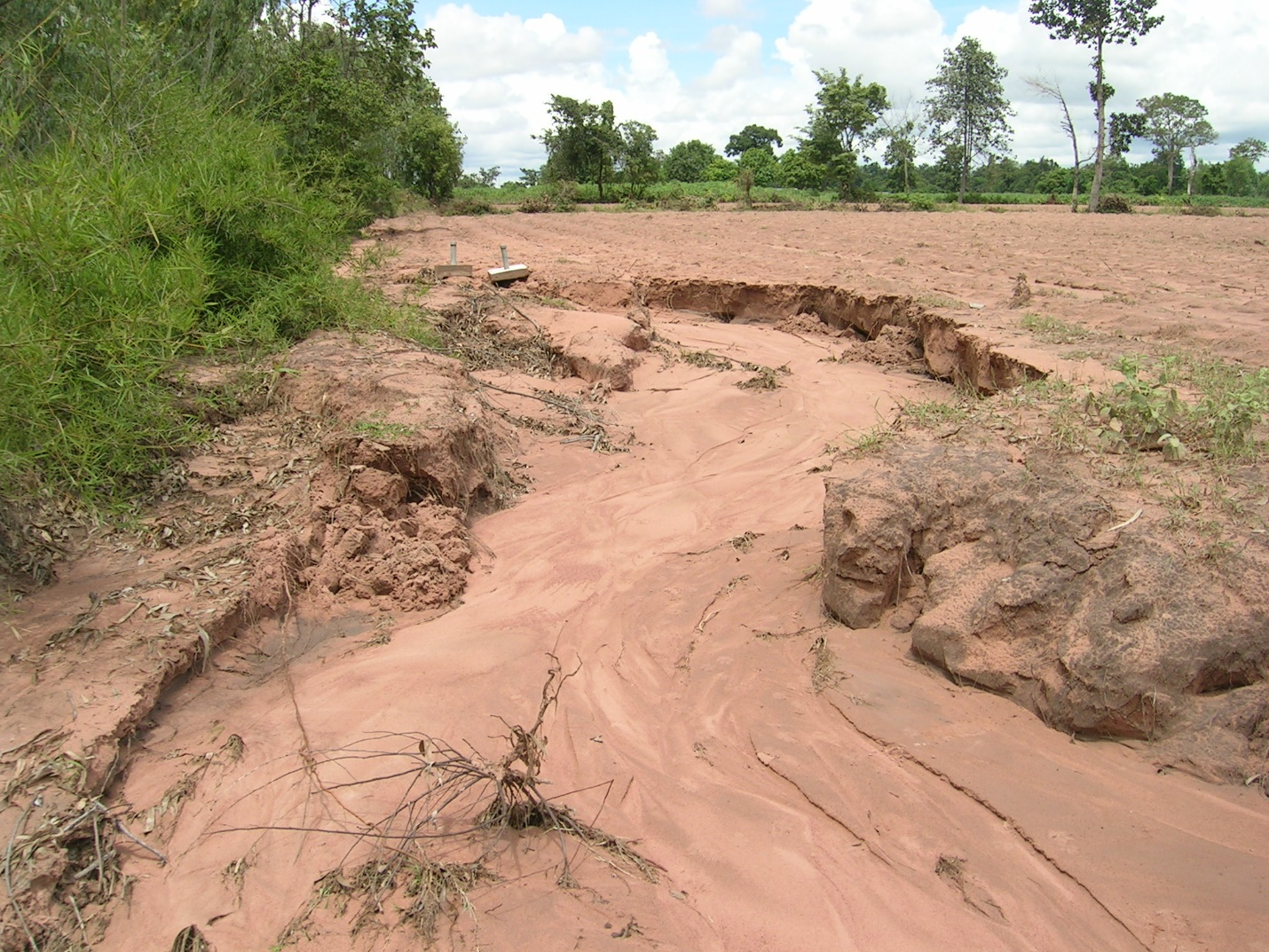 Soil erosion in northeast Thailand. Losing precious surface soil which is already been degraded with very low soil organic carbon and nutrients. (Photo by Yuji Niino, FAO)