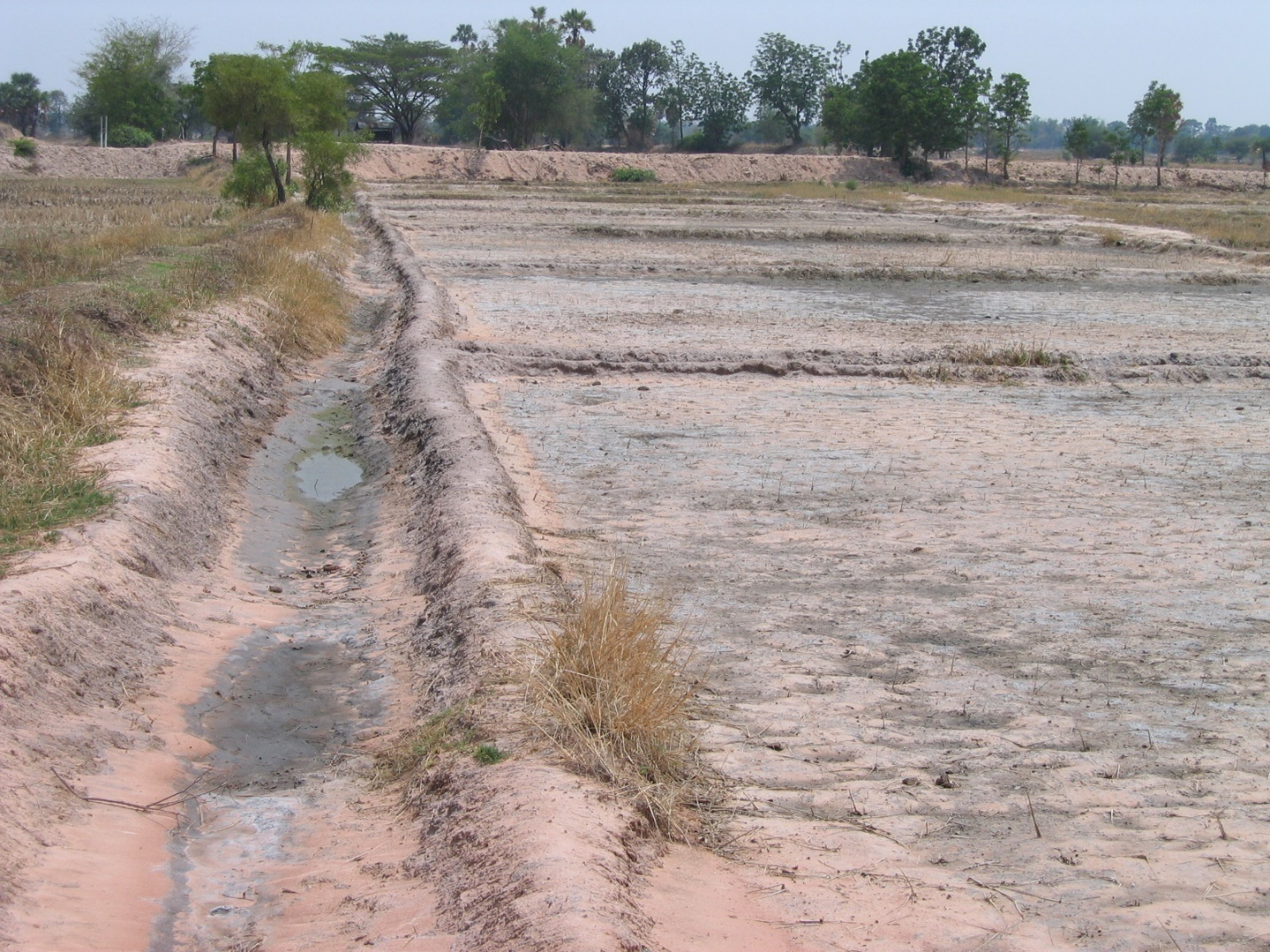 Saline soil in northeast Thailand. Soil salinity is difficult to manage although there are some technical options available (Photo by Y. Niino)