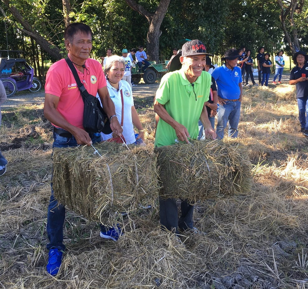 In the next two years, the RiceStrawPH project will develop scalable technologies and mechanisms where rice straw can contribute to the livelihoods of Filipino rice farmers. (Photo: A.Roxas)