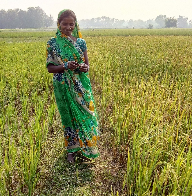 Sohabati Devi looks at her BINA 11 rice crop that recovered from a devastating flood and ready for harvest. (Photo: IRRI India)
