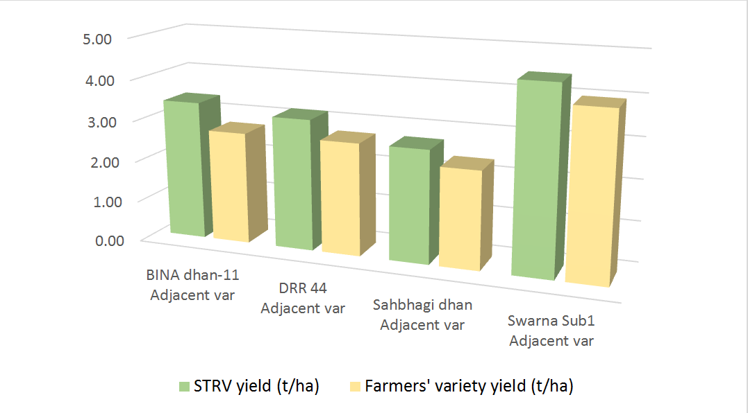 Figure 1. Yield of stress-tolerant rice varieties (STRV) vs traditional varieties (adjacent varieties) as reported by farmers.