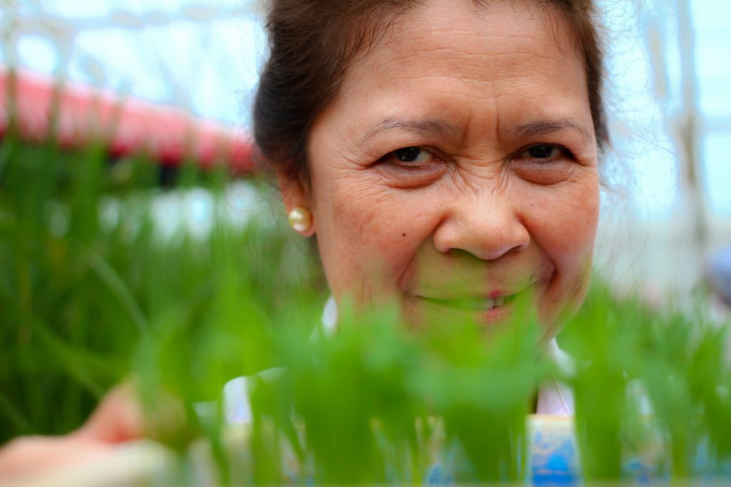 """8.Casiana Vera Cruz is among the pioneer female scientists at IRRI where she worked as a plant pathologist. """"I really didn't feel that being a female staff member was any kind of problem for me,"""" Dr. Vera Cruz said. Although she had the opportunity to be part of IRRI's upper management but """"I preferred working in science."""" She conducted research on host-plant resistance to diseases and bacterial and fungal disease screening in rice breeding programs . She is a technical writer and editor, along other pathologists, of IRRI's online resource Rice diseases: their biology and selected management practices. Currently, she is serving as an IRRI consultant. (Photo: IRRI)"""