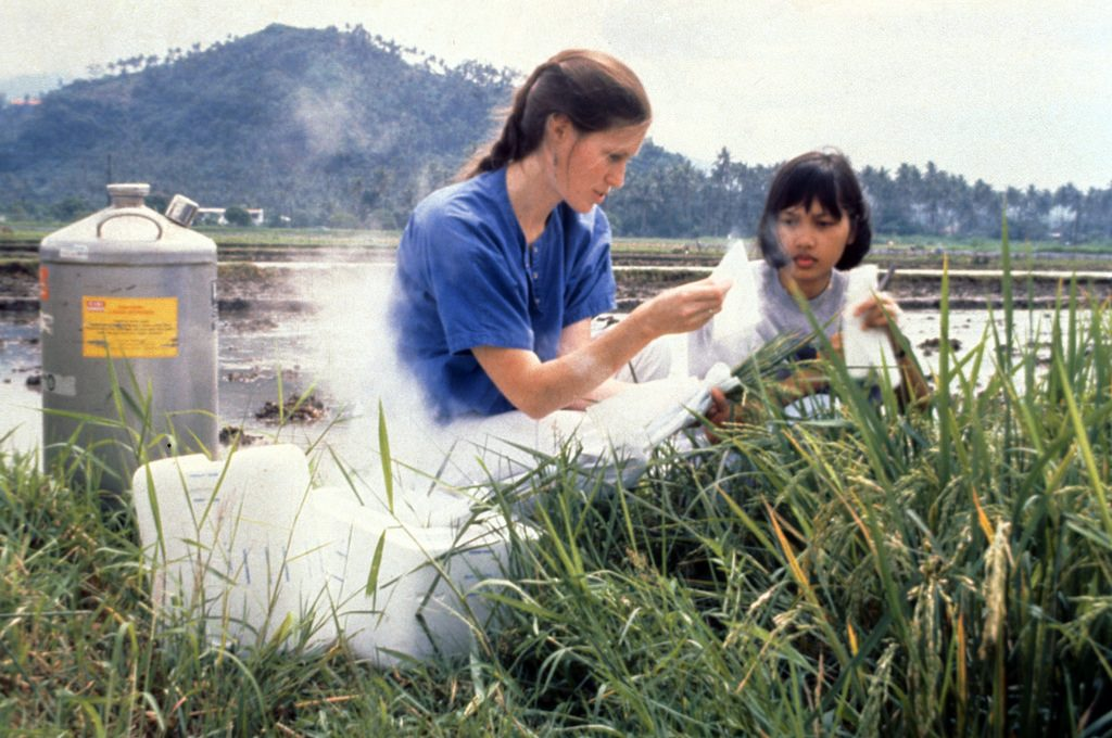 """Dr. McCouch, shown here collecting samples for genome mapping at IRRI, is a Professor of Plant Breeding and Genetics, Plant Biology, Biological Statistics and Computational Biology at Cornell University. In 1988, she worked with Chinese colleagues Z. H. Yu and Z. Y. Wang, put together that first molecular map of rice which was published in 1988. """"I made my first trip to IRRI to present the results of that work,"""" she said. """"I was stunned by the number of people in so many diverse fields, all of them concentrated on rice. I was excited by it all. I think people were equally excited by the work we were doing at Cornell. There was a very good synergy and I think that first visit was the thing that cemented the relationship that would evolve into a job opportunity at IRRI when I finished my PhD in 1990."""" (Photo: IRRI)"""