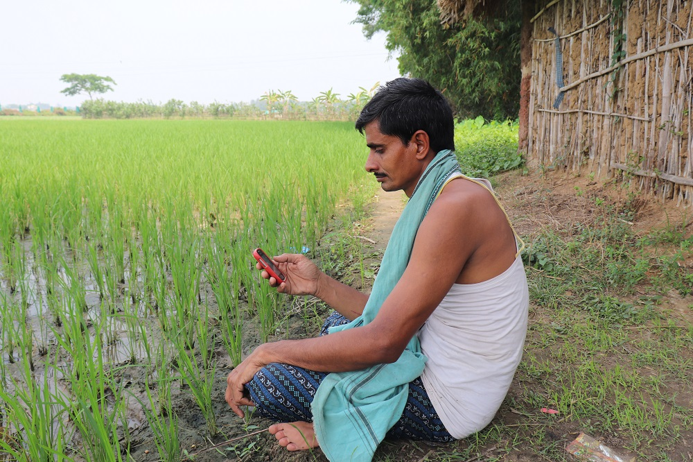 A farmer reading locally customized crop management practices specific to their field advisories delivered through his mobile phone. (Photo: IRRI India)