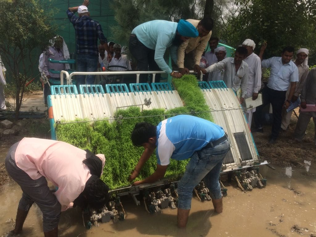 Farmers at an on-site demonstration for transplanting hydroponically grown rice seedlings. (Photo: Ayurvet Research Center)