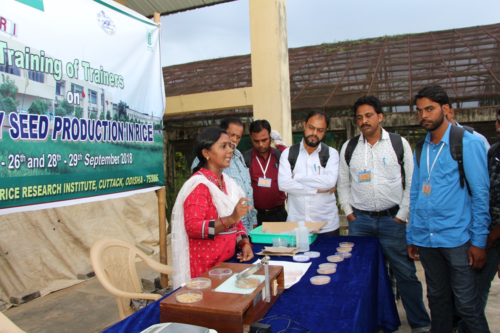 Participants learning the basics of quality rice seed production at a ToT held at IRRI in Odisha. (Photo: IRRI India)