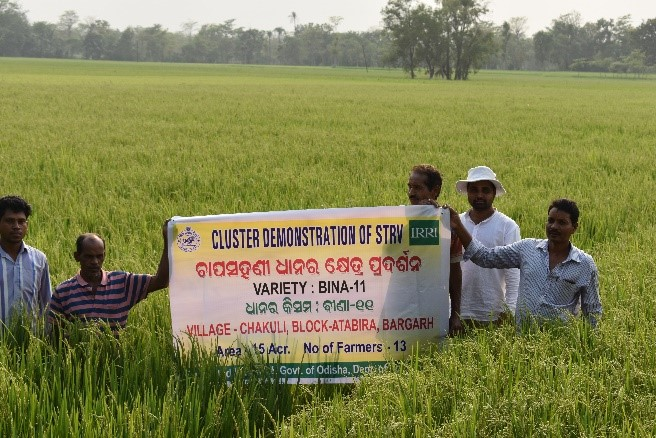 Farmers at the cluster demonstration of BINA dhan-11, a project of DAFE and IRRI. (Photo: IRRI India)