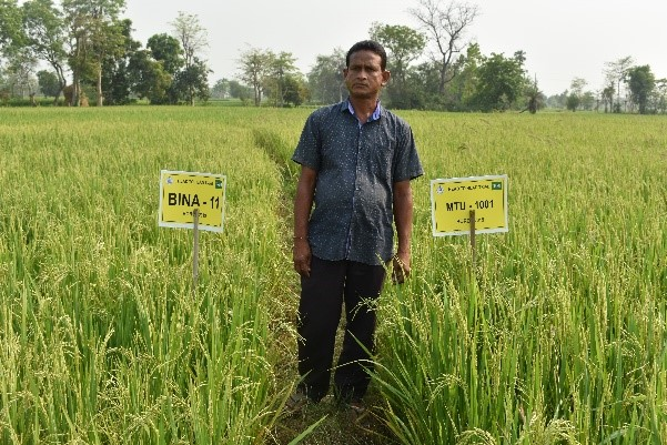 A head-to-head trial compares the agronomic performance of BINA dhan-11 against MTU-1001. Head-to-head trials are effective in improving adoption and varietal replacement through informal seed diffusion. (Photo: IRRI India)