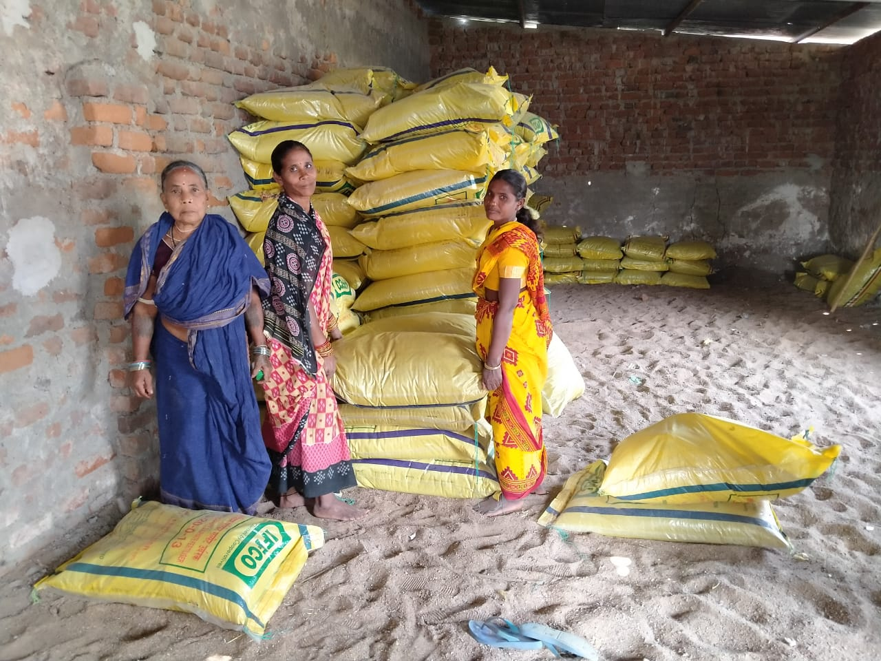 Women farmers distributing fertilizer in Kundamal Village, Dharamgarh, Kalahandi. (Photo: IRRI India)