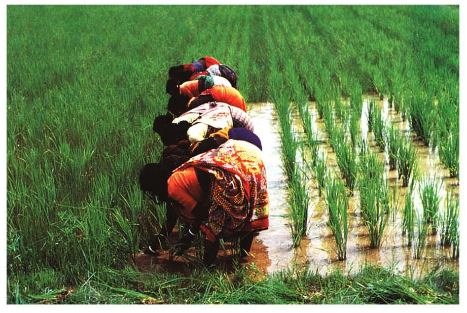 The Conference on Women in Rice Farming systems examined the role of women in rice farming and stressed their importance in the technology development and transfer process.