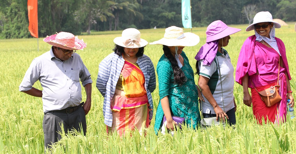 Built on the strong output of CORIGAP Phase 1, CORIGAP-PRO has already surpassed its goal of reaching half a million farmers. (Photo: CORIGAP)
