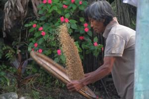 Winnowing organic rice grains in Naguet, Atok, Benguet. Farming is still much done manually in the Cordilleras.