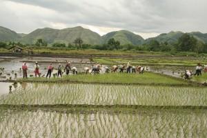 Cooperation among tribal folks during planting and harvesting season.